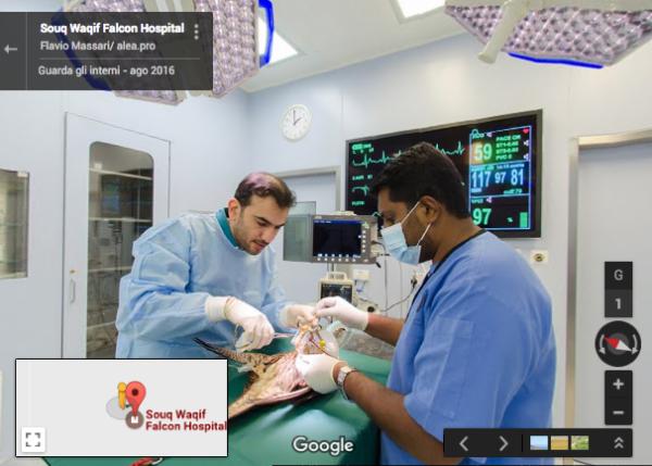 Souq Waqif Falcon Hospital – Doha – QATAR
